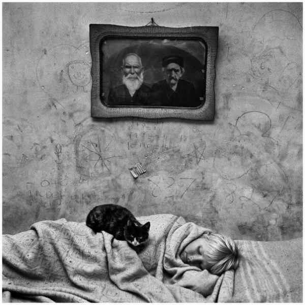 sleep-cozy-cat