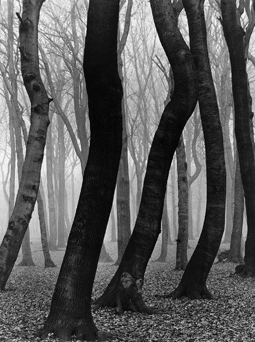 trees-black-and-white-woods