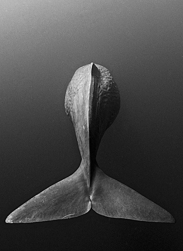 sperm-whale-photography
