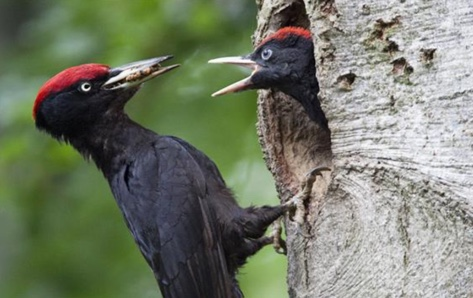 bird-father-feed-nature