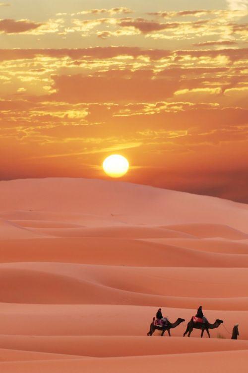 camel-hump-day-sun-sand-desert
