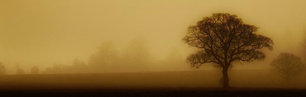 mist-morning