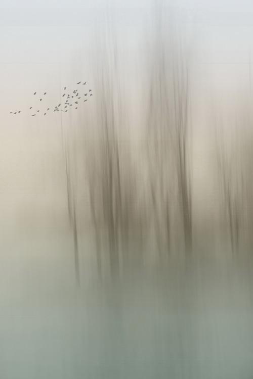 nature-birds-mist