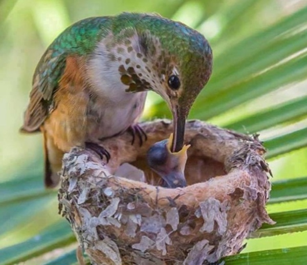 bird-feed-cute-nest-breakfast