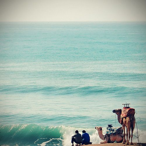 camel-wednesday-hump-day-ocean