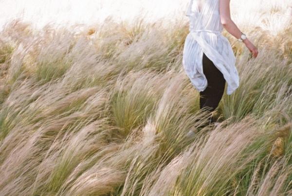 wind-breeze-meadow