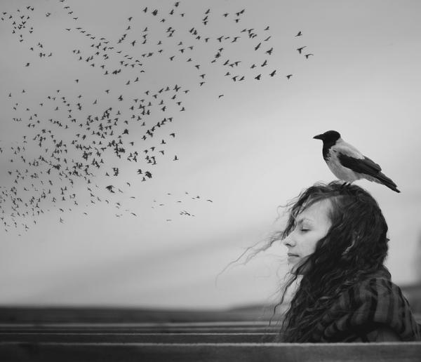bird-flock-see-feel
