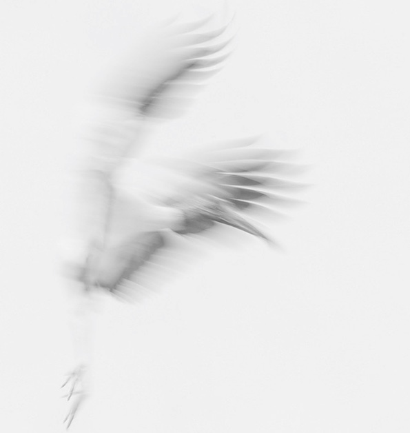 bird-simone-sbaraglia