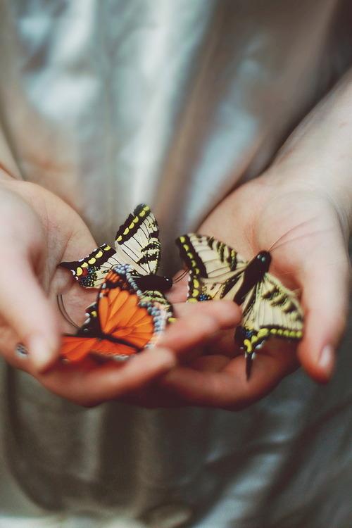 photograph-butterfly-butterflies-hand,
