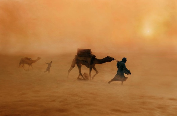 camel-dust-storm-hump-day-wednesday