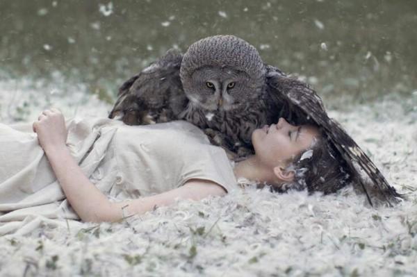 owl-dream