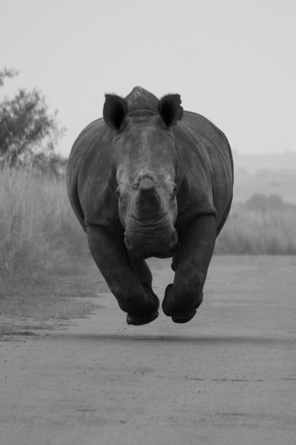 hippo-cute-run-tgif