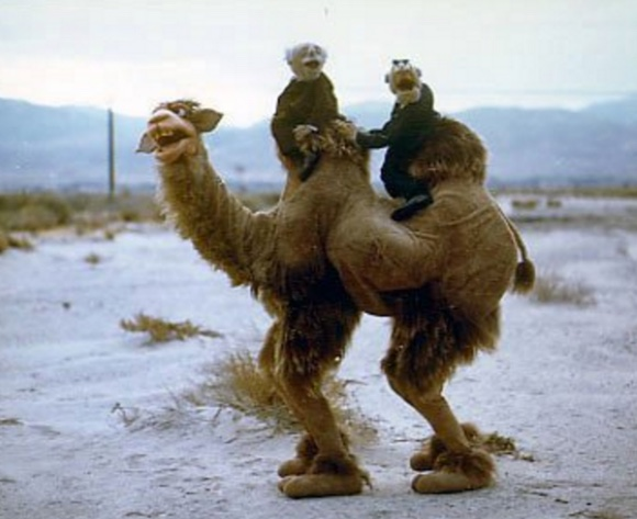 muppet-camel-funny-hump-day