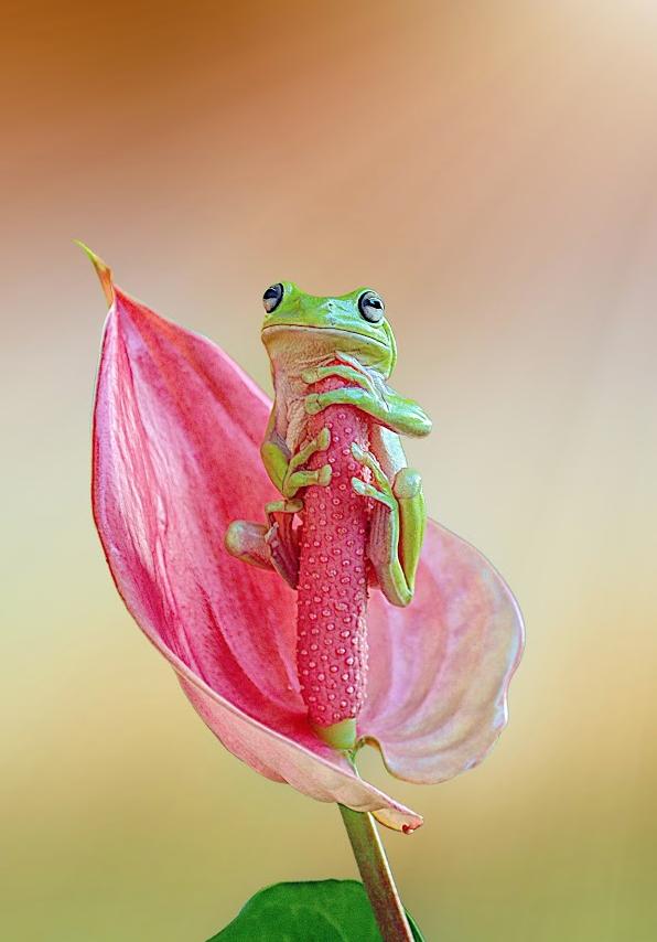 tree-frog-funny-cute-tgif-t-g-i-f