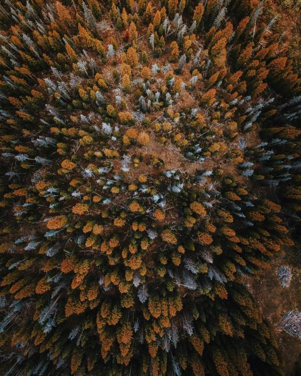 fall-autumn-forest-woods-aerial