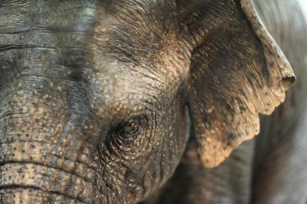 merelle-elephant-tgif