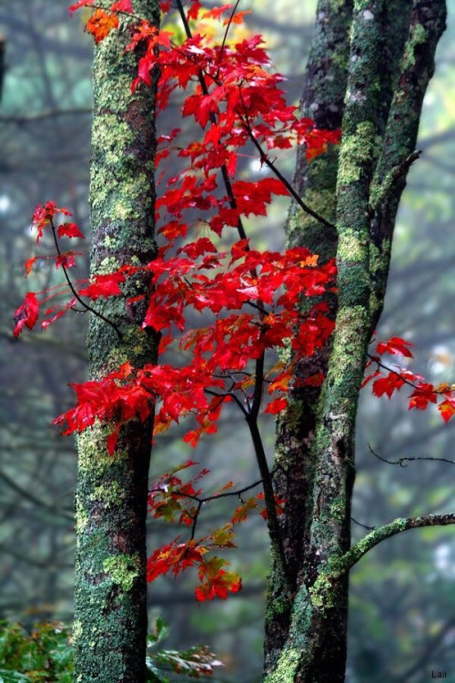 october-fall-autumn-red-leaves