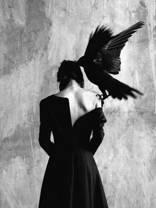 raven-shoulder