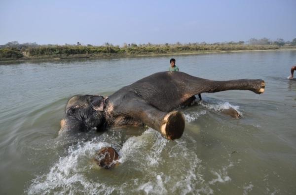 elephant-bath-tgif-t-g-i-f