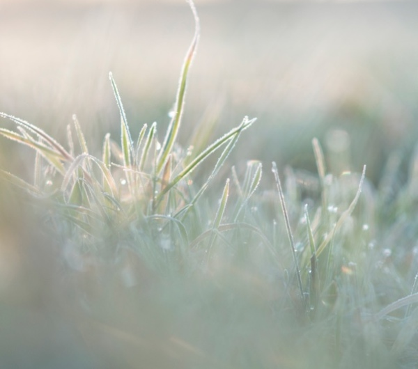 morning-frost-grass-light