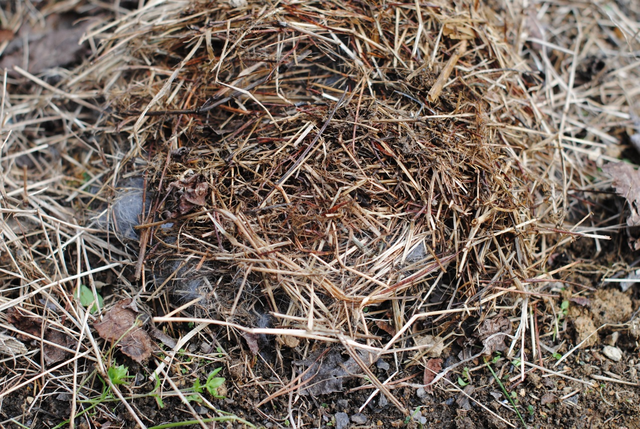rabbit-nest-empty-meuse