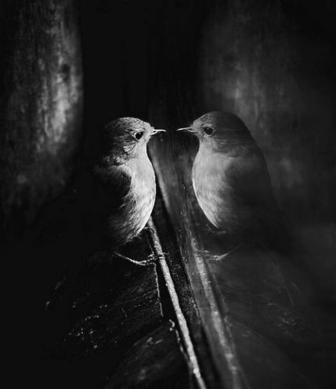 bird-mirror-introspection