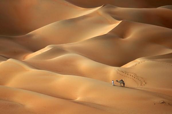 camel-hump-day-wednesday-abu-dhabi