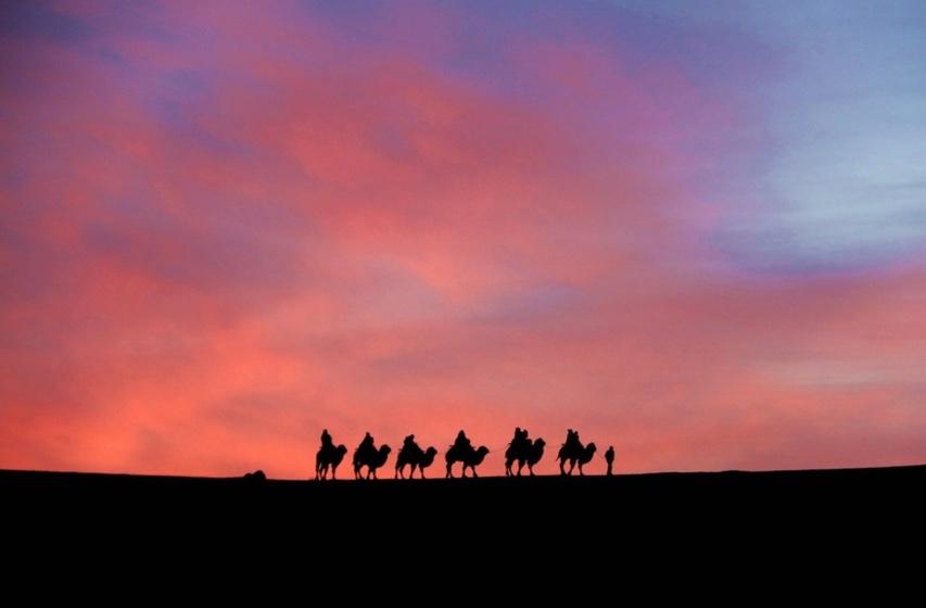 camel-hump-day-wednesday-china