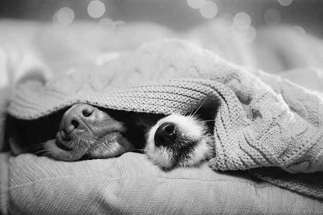 dog-pet-cute