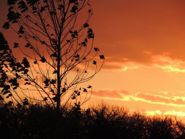 montana-sunset