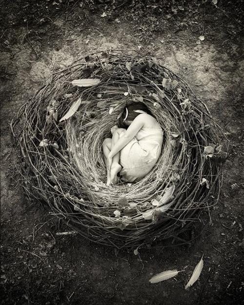 nest-sleep-silence