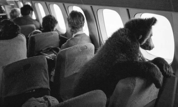 bear-plane